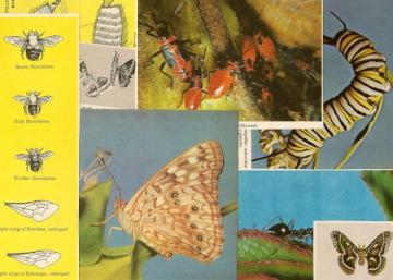 1960 Perfect Packet of 15 Audubon Insects Illustrations