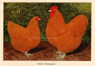 1893 Kurt Zander Victorian Chickens Lithograph ~ Fancy Orpingtons