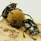 Vintage 1983 Edward Detmold Lithographs, Fabres Book of Insects, Pl 67-8