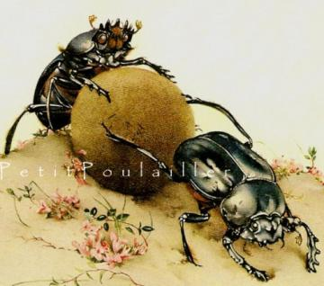 Edward Detmold and Fabres Book of Insects 1983 Lithographs, Pl 67-8