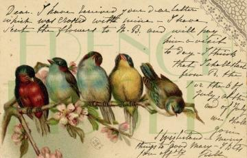 DIGITAL scan Colorful RAINBOW of BIRDS Italian German English antique postcard