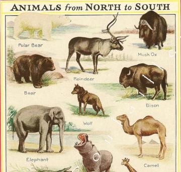 Kate Abelmann and Animals North to South 1935 Natural History Lithograph