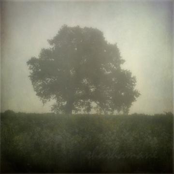 "Am I awake? - Misty, ethereal dawn scene 5 x 5"" fine art photography print"