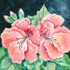 Martha Washington Geranium