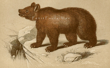 Antique 1850 Victorian Tallis Scriptures Natural History Engraving, Brown Bear