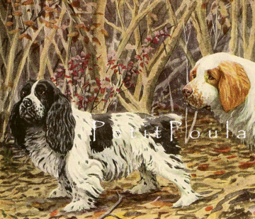 Antique 1919 Dog Lithograph From Louis Agassiz Fuertes Featuring Spaniels