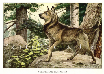 Antique 1919 Louis Agassiz Fuertes Canine Lithographs Featuring the Norwegian Elkhound and Otterhound