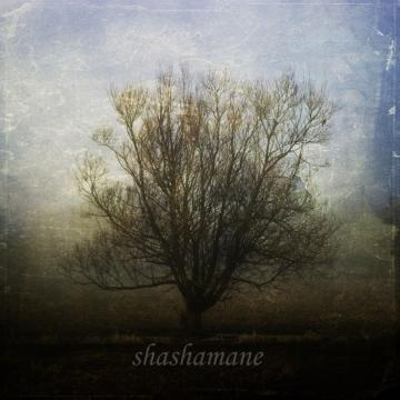 Dreams can grow in strange places 8x8 Fine art photography print
