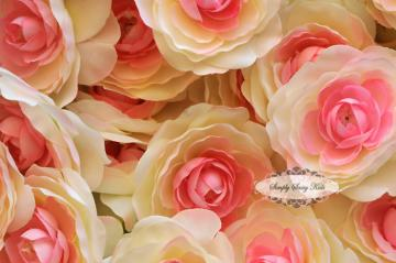 Pink & Cream 3 inch Ranunculus Flowers ~ GoRgEoUs Color!
