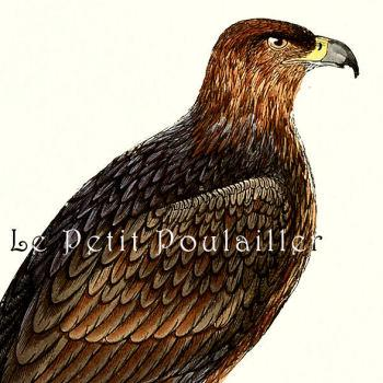 Antique Golden Eagle 1895 FO Morris Victorian Hand Colored Engraving