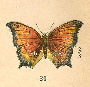 1906 Edwardian Natural History Butterfly Engraved Chromolitho, Pl 13-4