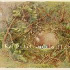 Hedge Sparrow and Spotted Fly Catcher 1880 Bird Nests and Eggs Lithographs
