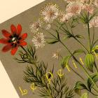 Wildflowers 1892 German Botanical Engraved Chromolithograph, Pl 01