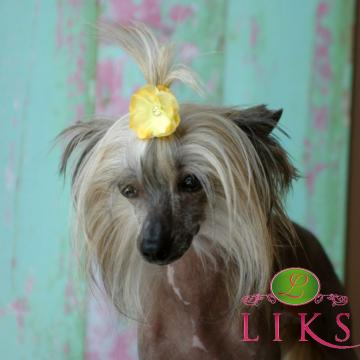 Yellow Blossom Dog Barrette