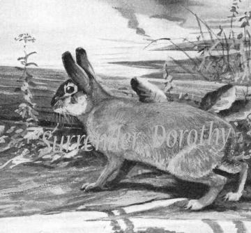1950 Marsh Rabbits Louis Agassiz Fuertes Illustration