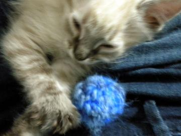 Blue Fuzzy Ball- Cat Toy- Set of 3