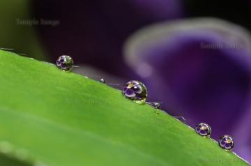 Dewdrops on leaf (8x12 Glossy Print) by Mark Edell Photography