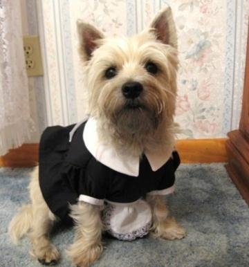 French Maid / Magenta Costume for Small to Medium Sized Dogs