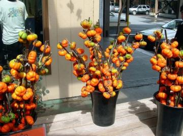 Fall Rare Hmong Pumpkin On A Stick Solanum integrifolium - 20 Seeds