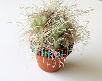 Mini Old Man Cactus Crochet Plant