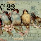 ORIGINAL Digital Collage RAINBOW of BIRDS French Music Petit Oiseau Symphony No. 22 Gift tag Design
