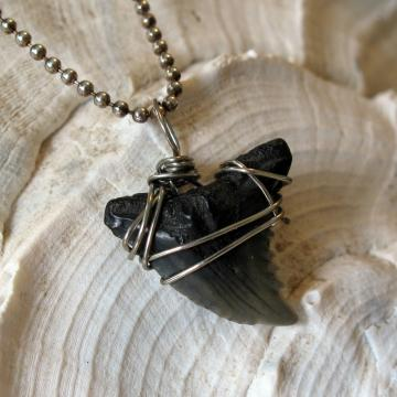 Fossilized Snaggle Tooth Shark Tooth Necklace