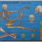 Human Body Skeleton Puzzle Instructional Fair IF 887