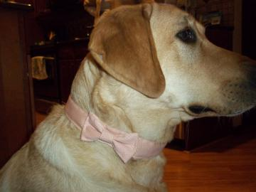 Pink Dog Collar w/ Bow