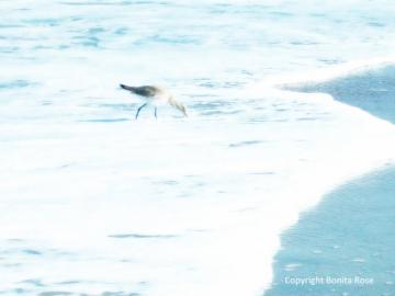 Ocean Photography - Bird in Blue  8x10