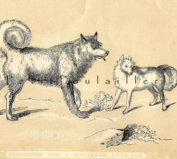 Antique Victorian Canine Engraving 1850 Tallis Scriptures Esquimaux and Mackenzie River Dogs