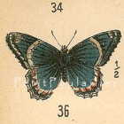 Antique 1906 Edwardian Butterfly Engraved Chromolithographs, Pl 5-6