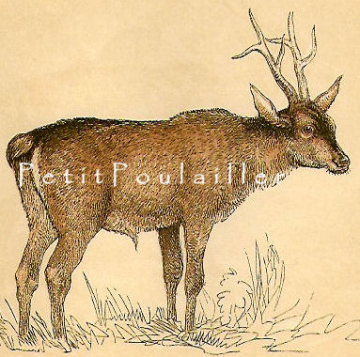 Antique 1850 Victorian Hand Colored Natural History Engraving, The Roebuck