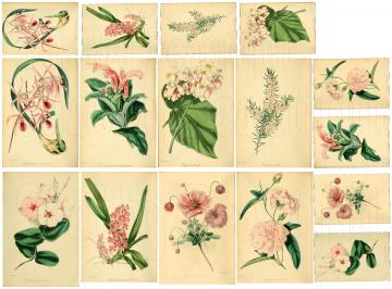 Shabby chic Pink Botanical digital collage sheets for scrapbook and cards DC9
