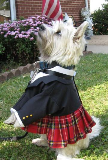 Scottish Kilt for Medium Sized Dogs Featuring Prince Charlie Jacket