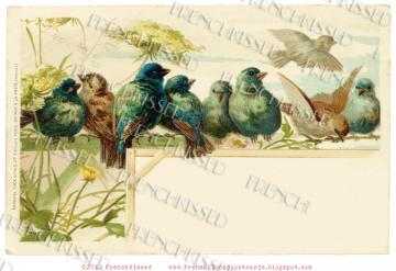 DIGITAL scan Antique French BLUE BIRDS postcard CUSTOMIZE Blank space Invitation Idea