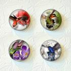 "Hummingbird Magnet Set 1.5"" in Size ""Buy 3 Get 1 Free"" 208MS"