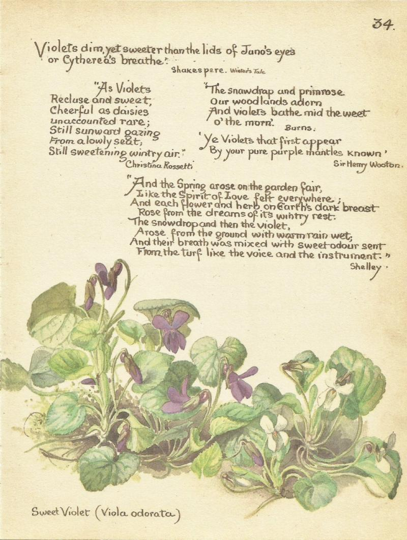 Diary Of An Interior Novice: Edith Holden's Writings And Drawings From March 1906